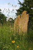 Gravstenar i en bevuxen kyrklig gård Royaltyfria Bilder
