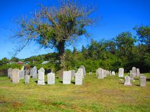 Gravstenar under träd i en kyrkogård Arkivbild