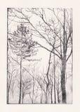 Gravura a água-forte da árvore ilustração do vetor