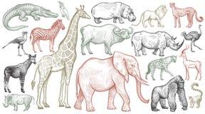 Gravura de animais africanos Fotografia de Stock