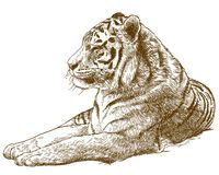 Gravure de l'illustration de dessin du tigre d'Amur de tigre sibérien image stock