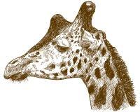 Gravure de l'illustration de dessin de la tête de girafe photographie stock libre de droits