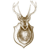 Gravure de la tête bourrée de renne sur le fond blanc Photos stock