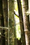 Gravure sur un arbre en bambou à Puerto Rico photos stock