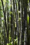 Gravure sur un arbre en bambou à Puerto Rico images stock