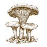 Gravureillustratie van drie paddestoelen Stock Fotografie