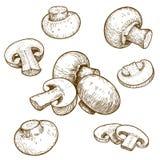 Gravureillustratie van paddestoelenchampignons Stock Afbeeldingen