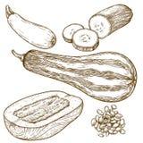 Gravureillustratie van velen pompoen vector illustratie