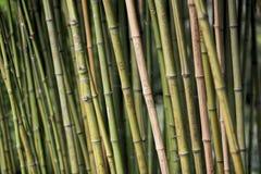 Gravures d'amour sur les bambous images libres de droits