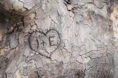 Gravures sur une écorce de tree's Image libre de droits