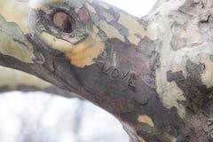 Gravures sur une écorce de tree's Image stock