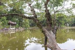 Gravvalv av Minh Mang King i ton, Vietnam Royaltyfria Foton