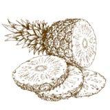 Gravyrillustration av ananas och skivor Royaltyfri Bild