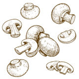 Gravyrillustration av champinjonchampignons stock illustrationer