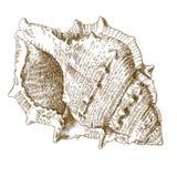 Gravyrillustration av det spiral snäckskalet Royaltyfri Fotografi