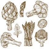 Gravyrillustration av gröna grönsaker Arkivbild