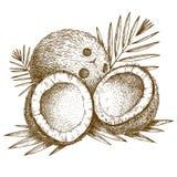 Gravyrillustration av kokosnöten och palmbladet Arkivfoton