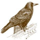 Gravyrillustration av korpsvart Arkivbild