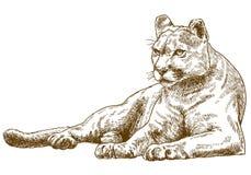 Gravyrillustration av puman Arkivbilder