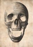 Gravyrvektorskalle på gammal pappers- bakgrund royaltyfri illustrationer