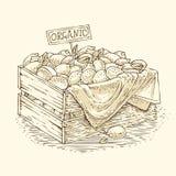 Grawerować Drewnianego pudełko z Dojrzałymi cytrynami Obraz Royalty Free