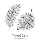 Grawerować tropikalne ilustracje z liścia monstera i banan palmą Wręcza patroszonych elementy dla ślubnych zaproszeń, kartka z po ilustracji