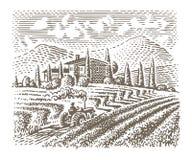 Grawerujący stylową ilustrację europejski winnica uprawia ziemię wektor ilustracja wektor