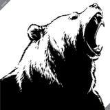 Graweruję odizolowywał niedźwiadkowego ilustracyjnego wektorowego nakreślenia liniową sztukę zdjęcia royalty free