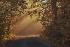 Gray Asphalt Road in Between Brown Orange Leaf Trees during Daytime stock image