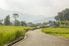 Agray asphalt road among green rice fields against the background of houses and mountain silhouettes. Gray asphalt road among green rice fields against the stock image