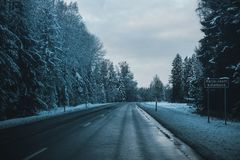 Gray Asphalt Road Between Trees Covered by Snows Stock Images