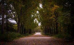 Gray Asphalt Roadway Besides Green Leaf Tree Stock Images