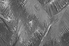 Beautiful palm trees background. Tropical and exotic landscape. Wallpapers with palm trees. Tinted monochrome, black and white stock photo