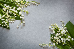 Gray background with flowers lily of the valley and copy space Royalty Free Stock Photos
