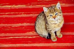 Kitten sits on a bench Stock Photography