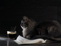 Gray big cat lies on the open book. Royalty Free Stock Photos