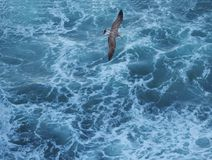Gray seagull flying over blue rough sea top view Stock Photos