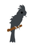 Gray bird. A big gray parrot on a branch Royalty Free Illustration