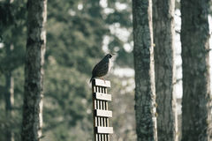 Gray Bird on Brown Rack during Daytime Royalty Free Stock Image