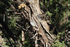 Gray Bird en el top del árbol Fotografía de archivo libre de regalías