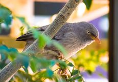Gray Bird Perched On Tree Branch Stock Photo