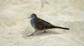 Gray and Black Bird on White Sand during Daytime Stock Images