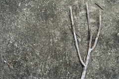 A gray branch on a rock Stock Images