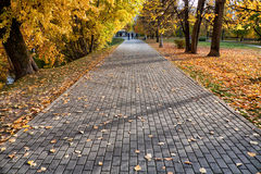 Gray brick road. Path in park against autumn leaves Stock Image