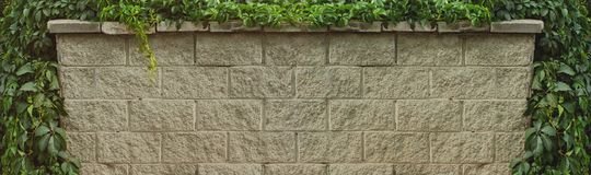 Gray brick wall covered with wild green grape leaves. For background. Nature frame Royalty Free Stock Images