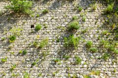 Gray brick wall with green grass Royalty Free Stock Photos