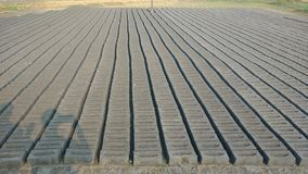Gray bricks arranged in rows and columns. Made up of mud, clay and sand mixture Stock Image