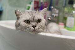 Cat in a sink Stock Image