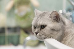 Cat in a sink Royalty Free Stock Images