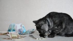 Gray British-katje het spelen met smartphone en Russisch geld stock videobeelden